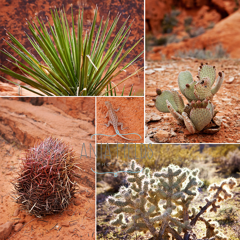 valley-of-fire-plants