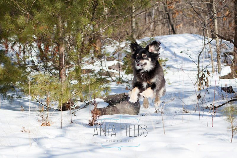 hikes-with-dog-in-Wisconsin_05