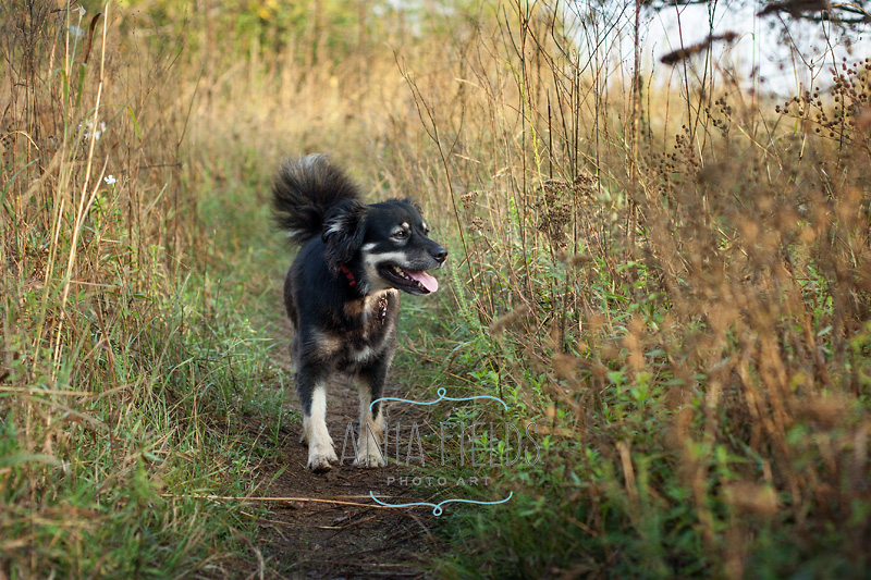 hikes-with-dog-in-Wisconsin_26