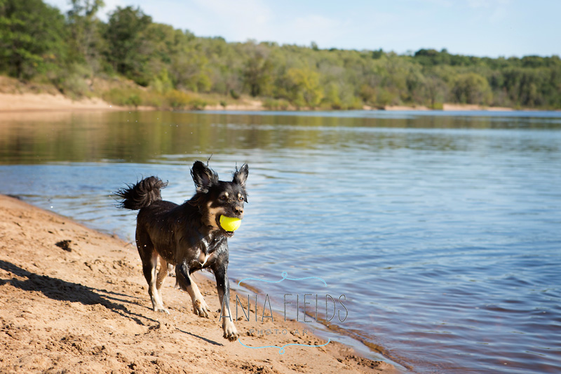 hikes-with-dog-in-Wisconsin_29