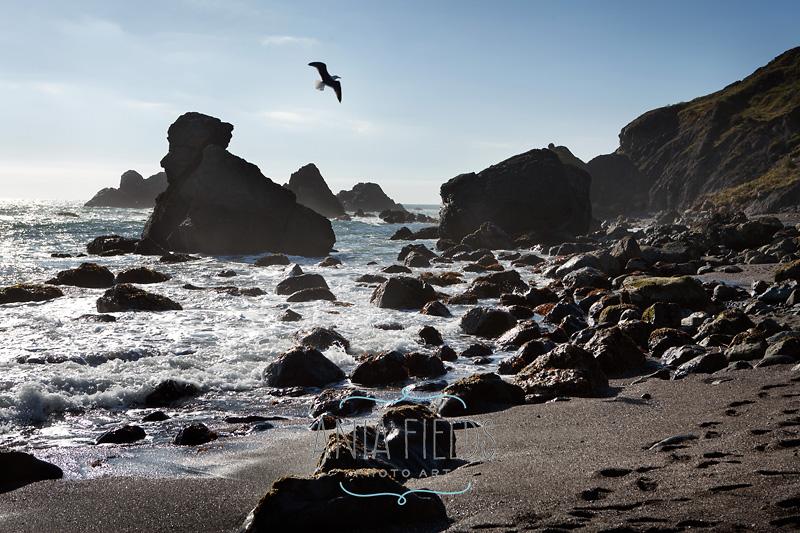 Shell-Beach-Sonoma-coast
