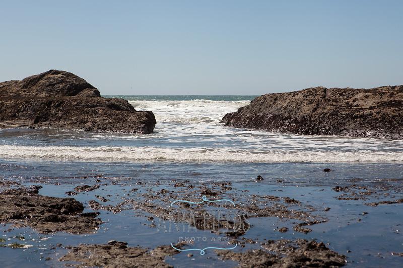 Duxbury Reef at low tide