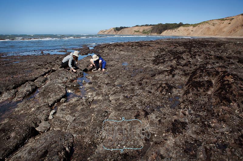 kids exploring Duxbury Reef
