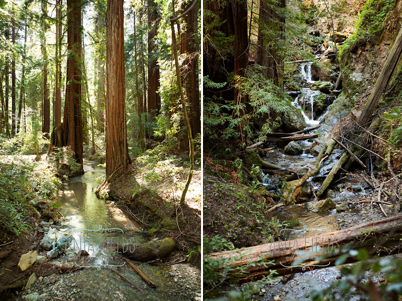 redwood forest streams