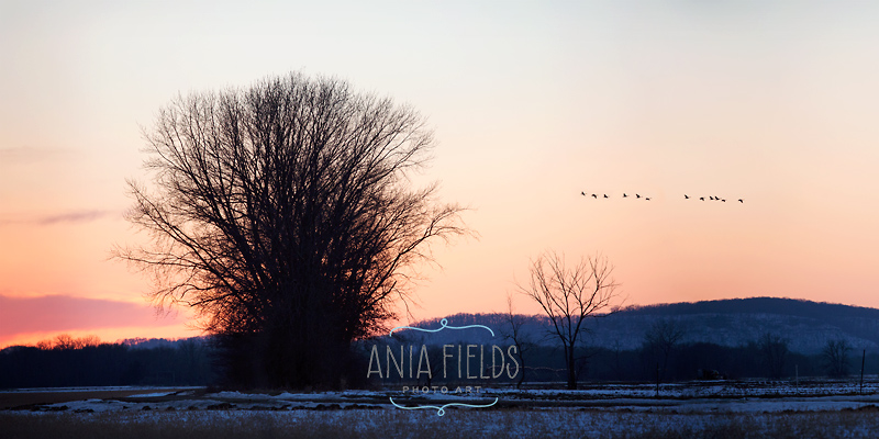 winter sunset in Wisconsin