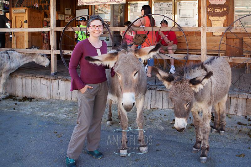 burros in Oatman AZ