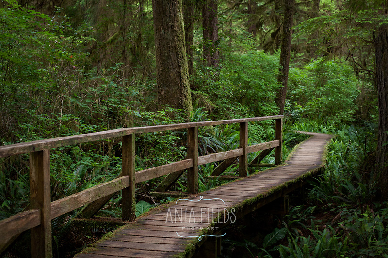 temperate rain forest Vancouver Island