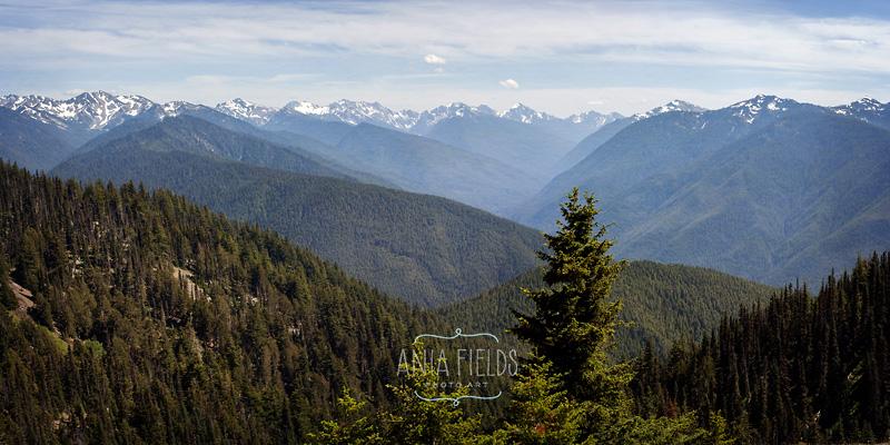 panoramic view from Hurricane ridge
