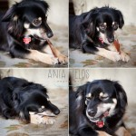 how-to-make-scoby-dog-treats