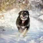 dog enjoying first snow